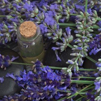 83391290 - fresh lavender flowers